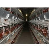 Клетки для кур несушек купить в Украине