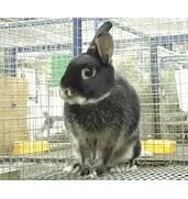 Купити клітки для кроликів недорого