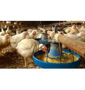 Комбікорм для птахів купити оптом пропонує компанія ОРАС