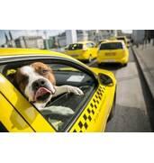Перевозка домашних животных в такси Киев - новая услуга от компании Авангард