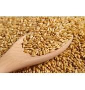 Купити пшеницю 4 класу оптом в Луцьку!