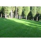 Насіння газонних трав купитинедорого