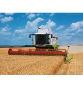 Заказывайте услуги зерноуборочных комбайновТернополь