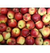 Здійснюємо продаж яблук оптом!