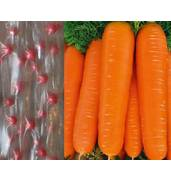 """""""Солнце Сад"""" предлагает купить семена овощей на водорастворимой ленте!"""