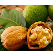 Покупайте саженцы низкорослого грецкого ореха