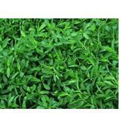 Виростіть оригінальний газон - виберіть насіння споришу!