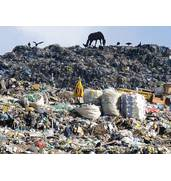Сохраните дерева для потомков, сортируйте отходы!