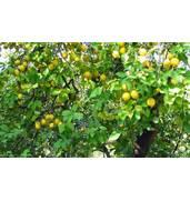Купуйте лимонну кислоту на нашому порталі недорого