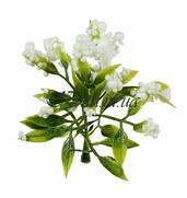 В інтерне-магазині Kvitu.in.ua купуйте штучні квіти недорого