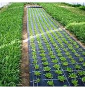 Предлагаем приобрести дешевое агроволокно на заказ