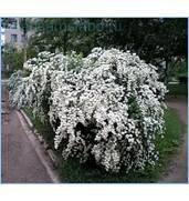 Широкий асортимент декоративних дерев та кущів, вирощених в Україні
