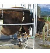 Животноводческое оборудование: продажа, доставка, гарантия