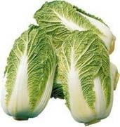 Большой выбор семян овощей оптом: семена пекинской капусты, белокочанной капусты