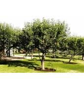 Саджанці дерев: доставка поштою