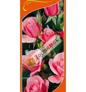 Саджанці троянд Кінг Артур, Біла Сенсація за доступними цінами