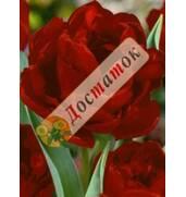 Луковицы тюльпанов Blumex Favoriet, Estella Rijnveld, Super Parrot. Заказывайте пряио здесь!