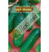 Предлагаем купить семена огурцов от компании Яскрава