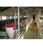 Продажа свиней живым весом - цена лучшая в регионе!