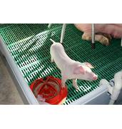 Вас интересует продажа свиней живым весом?