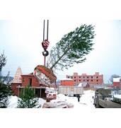 Пропонуємо послуги по посадці дерев взимку (Харків)
