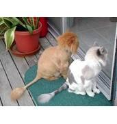 Увага! Стрижка котів вдома в Києві