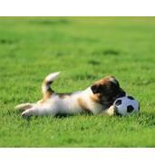 Спортивна газонна трава: футбол вдасться на всі 100%. Купуємо у нас!
