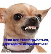 Дрессировка собак с проблемным поведением - зоопсихолог
