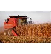 Уборка кукурузы на зерно без повреждений (Хмельницкая область)!