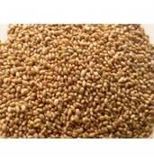 Продам насіння люцерни (Україна)