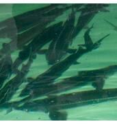 Увага! Лічильник риби за вигідною ціною