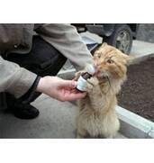 Ветеринарні препарати для кішок за доступними цінами