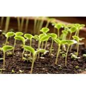 Потрібна посадка насіння? Ми вам у цьому допоможемо!
