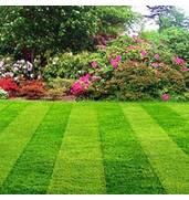 Насіння газонних трав оптом і в роздріб різних сортів!