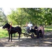Сельский зеленый туризм: катание на лошадях, сбор грибов и многое другое