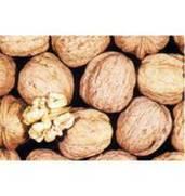 Выращивание саженцев грецкого ореха Казаку