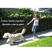 Дрессировка собак с проблемным поведением – дрессировка через понимание