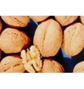 Выращивание саженцев: Калашарский орех