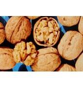 Грецкий орех Казаку: выращивание саженцев