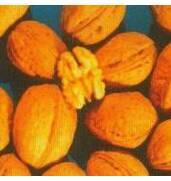 Выращивание саженцев грецкого ореха Когилничану
