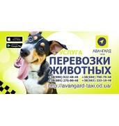 Перевозка домашних животных в такси Одессы