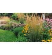 Ексклюзивні рослини для саду