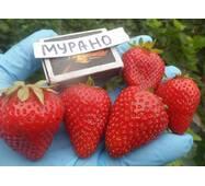 Суниця садова Мурано (ОКН-2040) за 0,5-1,5 л