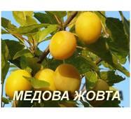 "Саженцы Сливы ""Медовая Жёлтая"""