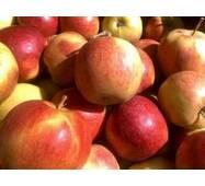 Яблоки Лигол на экспорт