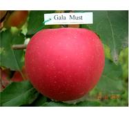 Яблоки Гала Маст