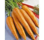 Морква Королева Осені за 2 г  (ЕМР-8)