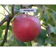 Яблоня Горец (Jonagored)