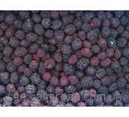 Замороженная ягода ежевики