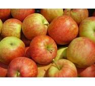Яблоки сорта Джонагоред